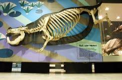 Senckenberg Naturmuseum Франкфурт Стоковое фото RF