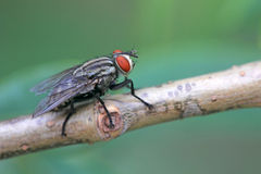 Send flies Royalty Free Stock Images