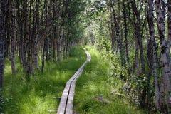 Senda para peatones de Kungsleden con los tablones de madera Foto de archivo
