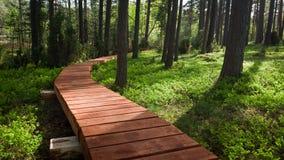 Senda para peatones de madera en bosque Imagen de archivo libre de regalías