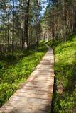 Senda para peatones de madera en bosque Fotos de archivo libres de regalías