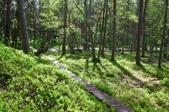 Senda para peatones de madera en bosque Imágenes de archivo libres de regalías