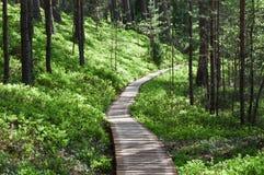 Senda para peatones de madera en bosque Imagenes de archivo