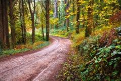 Senda para peatones del bosque Fotografía de archivo