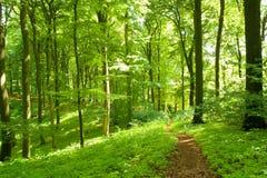 Senda para peatones del bosque Imagenes de archivo