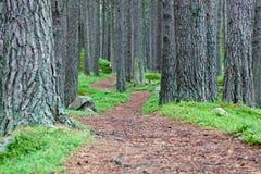 Senda para peatones del bosque del enrollamiento Imágenes de archivo libres de regalías