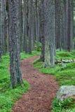 Senda para peatones del bosque del enrollamiento Imagen de archivo libre de regalías