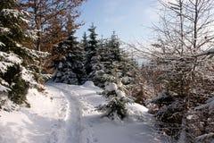 Senda para peatones del bosque del invierno Imagen de archivo