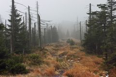 Senda para peatones en bosque brumoso oscuro Foto de archivo