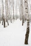 Senda para peatones en bosque del invierno Fotos de archivo