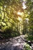 Senda para peatones en el bosque Imágenes de archivo libres de regalías