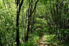 Senda para peatones en el bosque Foto de archivo libre de regalías