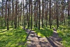 Senda para peatones en la madera Fotos de archivo libres de regalías