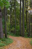 Senda para peatones en una madera de la cal Fotografía de archivo