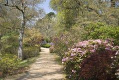 Senda para peatones a través de árboles y de arbustos hermosos en Spr foto de archivo