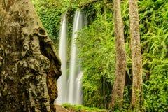 Sendang Gile Waterfall Royaltyfri Fotografi