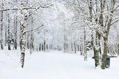 Sendas para peatones del invierno Imagen de archivo libre de regalías
