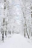 Sendas para peatones del invierno Fotos de archivo libres de regalías