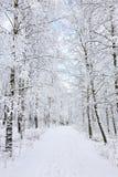 Sendas para peatones del invierno Imágenes de archivo libres de regalías
