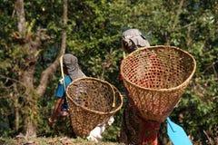 Senderismo de Himalaya Nepal Fotografía de archivo libre de regalías
