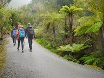 Senderismo de la selva tropical, Nueva Zelanda Imagen de archivo libre de regalías