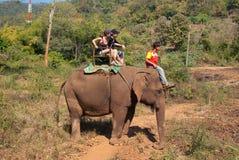 Senderismo del elefante Fotografía de archivo libre de regalías