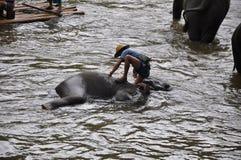 Senderismo del elefante en Tailandia Foto de archivo libre de regalías