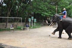 Senderismo del elefante en Tailandia Fotografía de archivo
