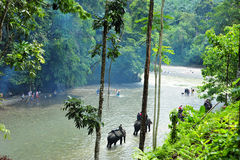 Senderismo en el parque nacional de Gunung Leuser de Sumatra, Ind del elefante Foto de archivo libre de regalías