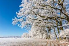 Sendero bajo ramas cubiertas por la helada Fotos de archivo libres de regalías