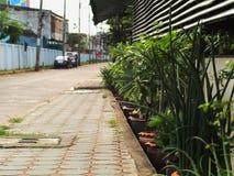 Sendero con las diversas plantas a lo largo del camino Imagen de archivo