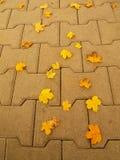 Sendero con las hojas de arce secas del amarillo anaranjado, hoja colorida de la piedra del adoquín del parque del otoño Imagen de archivo