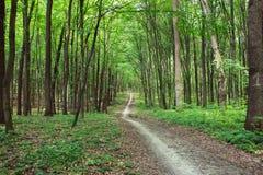 Sendero de la curva a través del bosque del verde de la primavera Foto de archivo libre de regalías