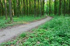 Sendero de la curva a través del bosque verde Fotos de archivo