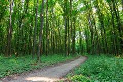 Sendero de la curva a través del bosque verde Imagenes de archivo
