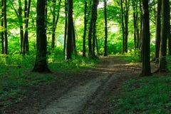 Sendero de la curva a través del bosque verde Fotos de archivo libres de regalías
