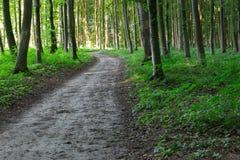 Sendero de la curva a través del bosque verde Foto de archivo libre de regalías