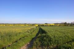 Sendero de las tierras de labrantío en primavera Imagen de archivo libre de regalías