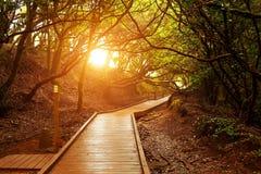 sendero de los Sentidos, Anaga国家公园,特内里费岛 免版税库存图片