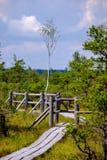 sendero de madera en el pantano - vertical, imagen lista del dispositivo móvil Fotos de archivo