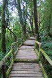 Sendero de madera viejo a través del bosque Fotos de archivo libres de regalías
