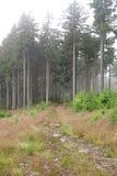 Sendero del bosque en bosque spruce Imagenes de archivo