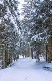 Sendero del invierno fotografía de archivo