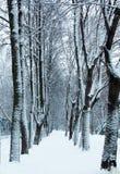 Sendero del invierno en el parque debajo de la nieve Fotos de archivo