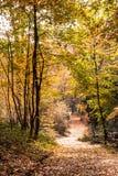 Sendero del parque del otoño imágenes de archivo libres de regalías
