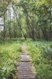Sendero en bosque de la región pantanosa Fotografía de archivo