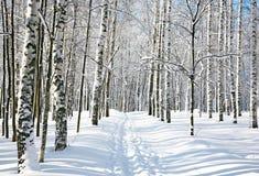 Sendero en bosque del abedul del invierno Foto de archivo