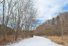 Sendero en bosque del invierno Fotografía de archivo libre de regalías
