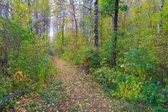 Sendero en bosque del otoño Fotos de archivo