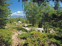 Sendero en el bosque del abedul y del pino con la roca y las montañas Fotografía de archivo